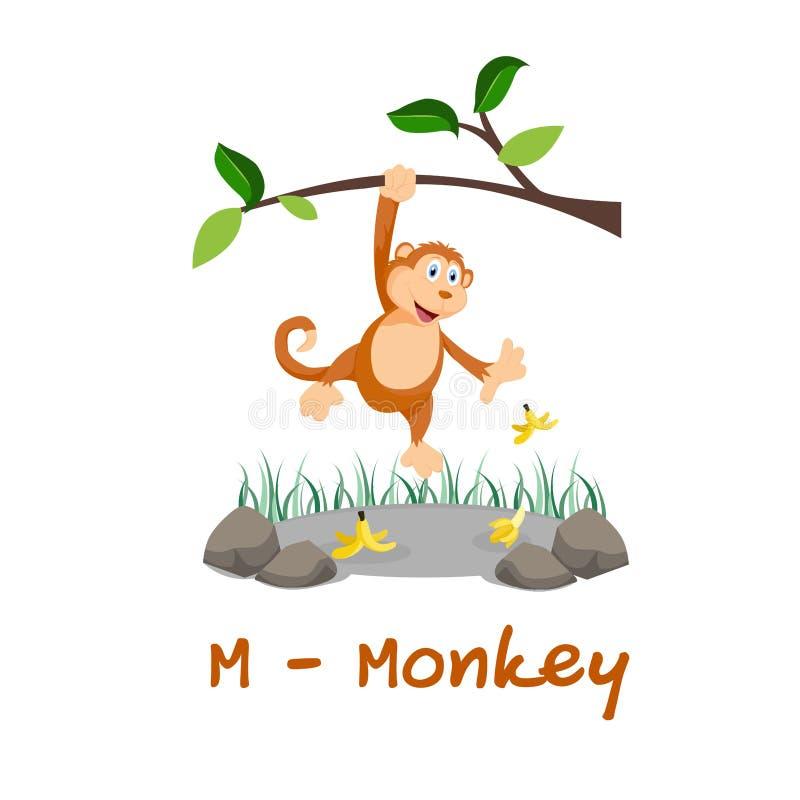 Isolerat djurt alfabet för ungarna, M för apa stock illustrationer