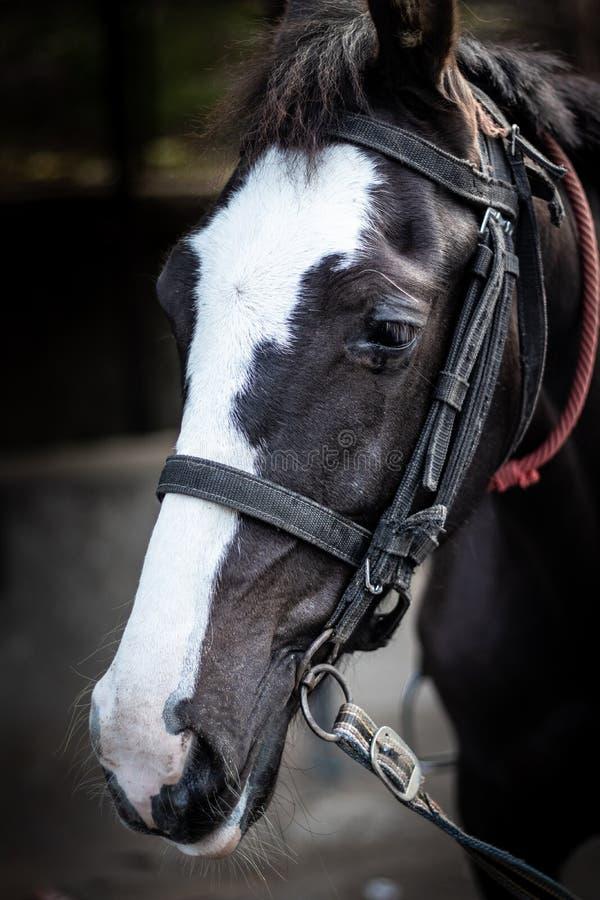 Isolerat hästhuvud med ögondetaljer royaltyfria foton