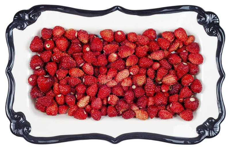 Isolerat keramiskt magasin för jordgubbe arkivfoto
