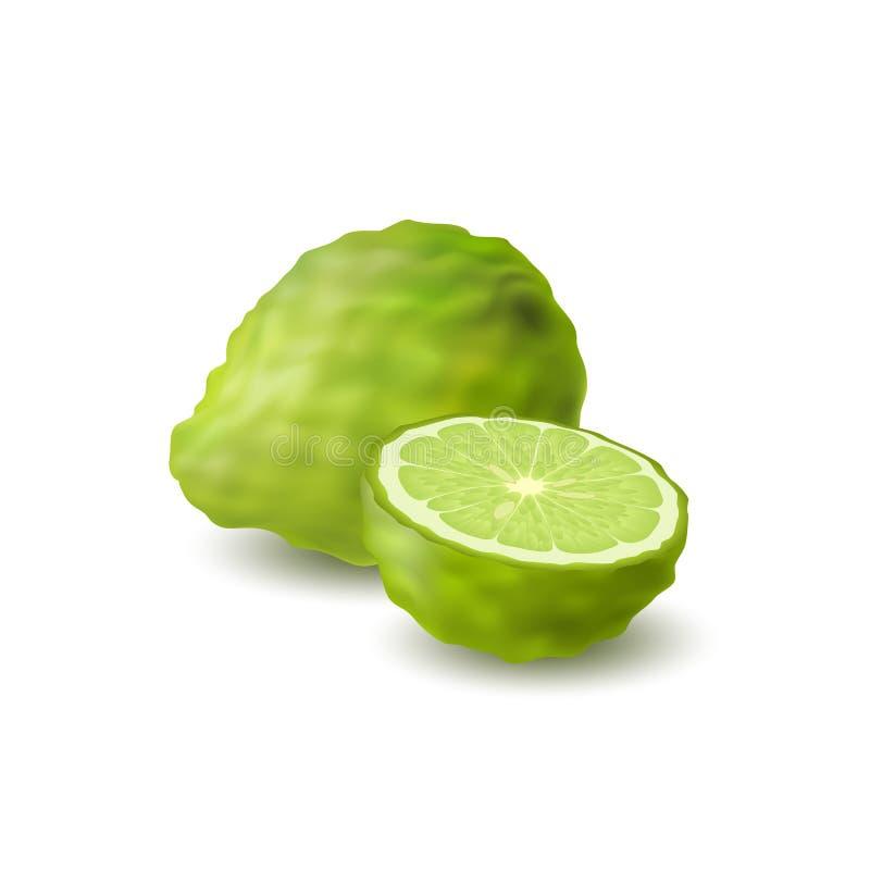 Isolerat kulört grönt helt och halva av den saftiga bergamoten, kaffirlimefrukt med skugga på vit bakgrund Realistisk citrusfrukt stock illustrationer