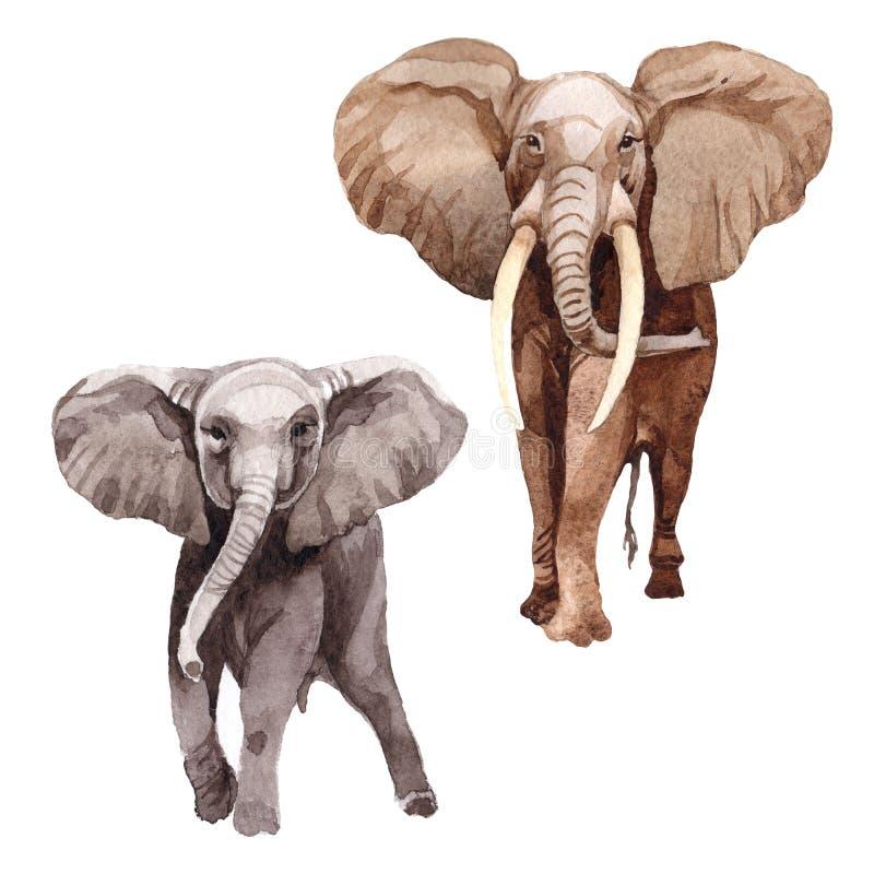 Isolerat löst djur för exotisk elefant i en vattenfärgstil royaltyfri illustrationer