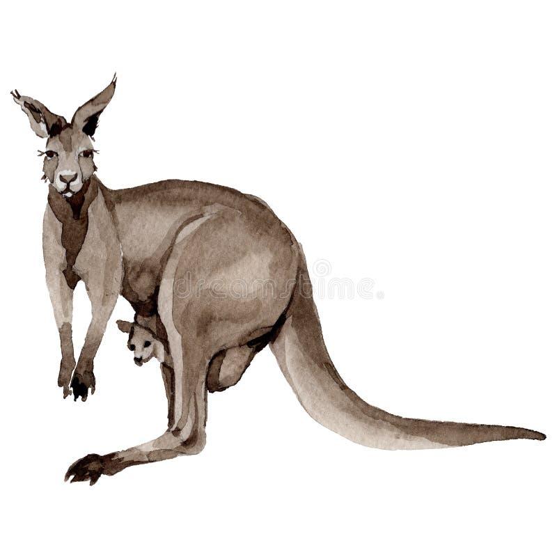 Isolerat löst djur för exotisk känguru i en vattenfärgstil stock illustrationer