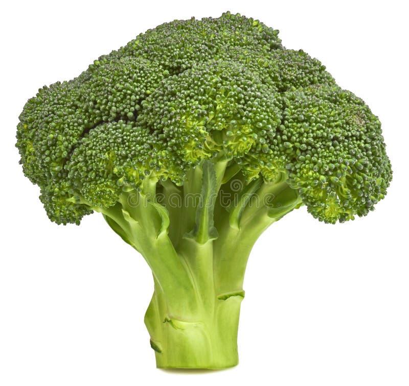 isolerat nytt för broccoli fotografering för bildbyråer