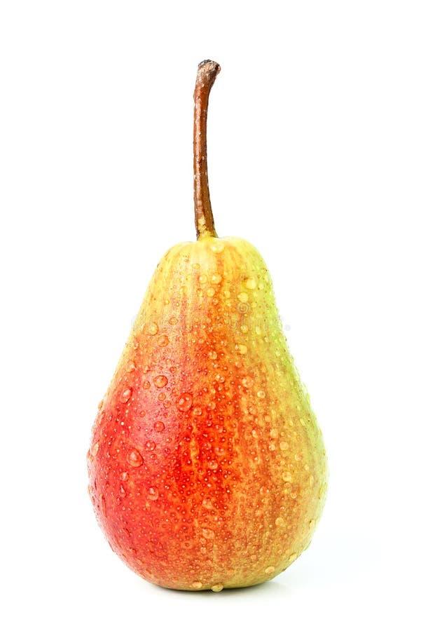 Isolerat nytt moget päron i droppar royaltyfri foto