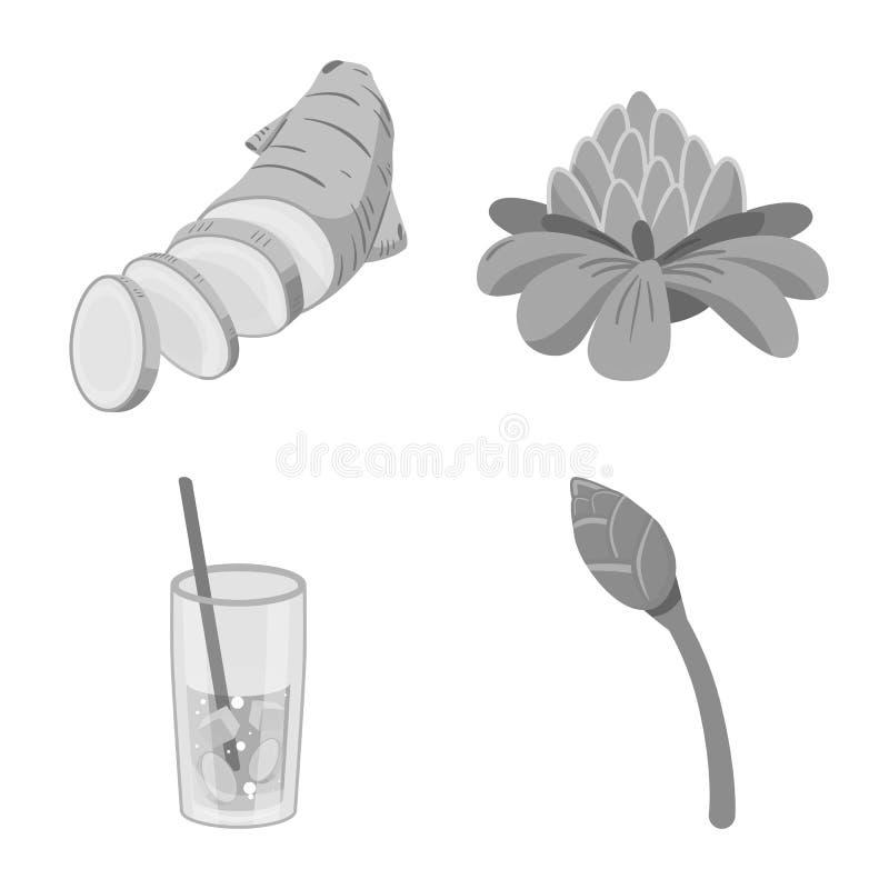 Isolerat objekt av krydda- och ingredienssymbolen Samling av krydda- och produktmaterielsymbolet för rengöringsduk stock illustrationer