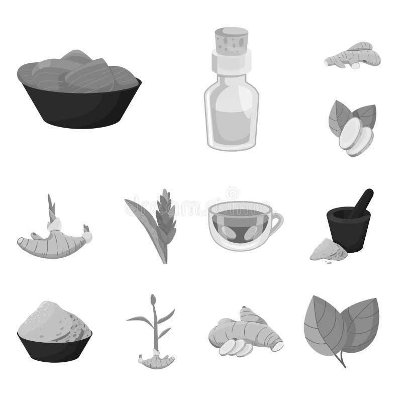 Isolerat objekt av krydda- och ingredienstecknet Samling av illustrationen för krydda- och produktmaterielvektor vektor illustrationer