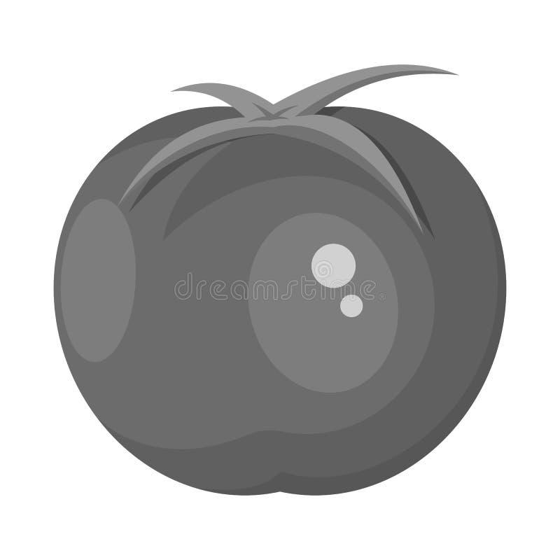 Isolerat objekt av tomaten och det runda symbolet Ställ in av tomaten, och saftigt lagerföra symbolet för rengöringsduk vektor illustrationer