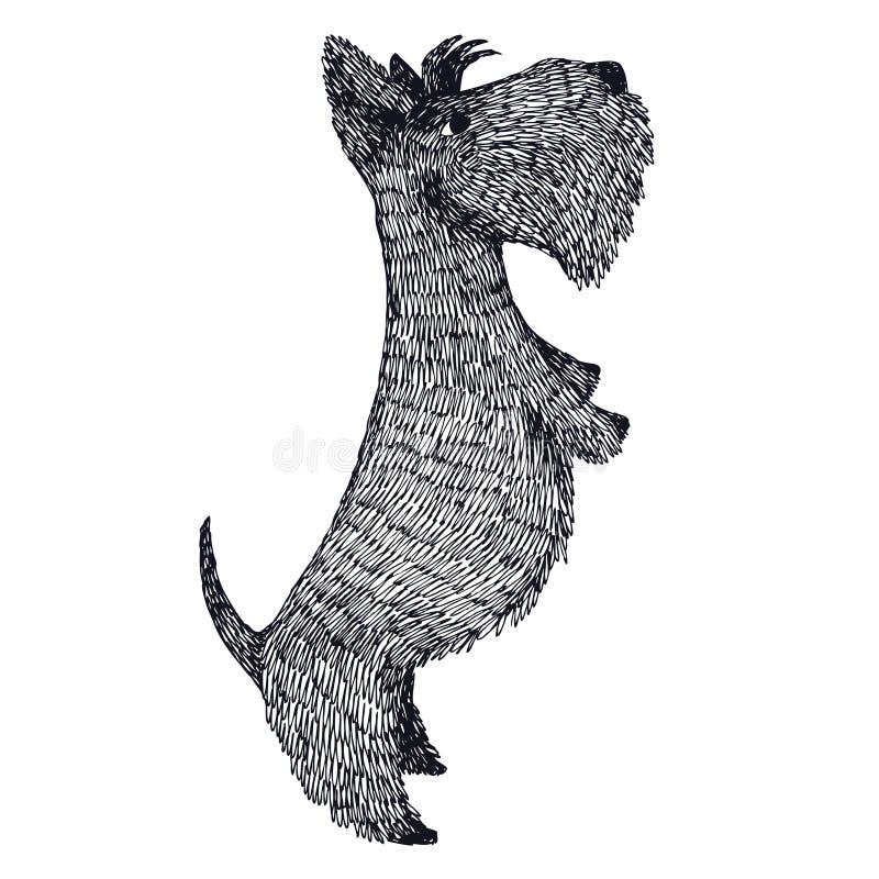 Isolerat objekt för skotteTerrier hand teckning vektor illustrationer