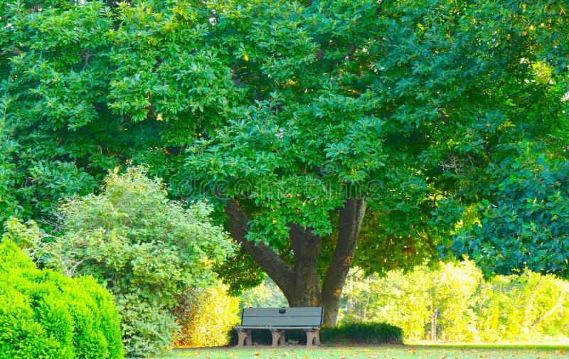 Isolerat parkera bänken under fördelande träd visar naturens skönhet arkivbilder