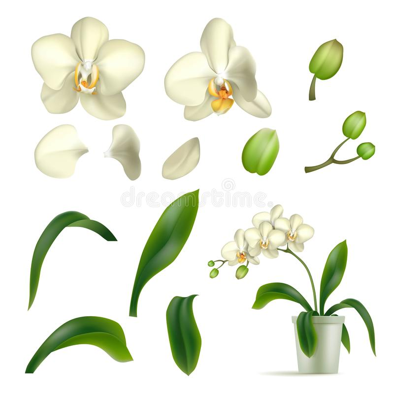 Isolerat realistiskt för kruka för orkidékronbladstjälk stock illustrationer