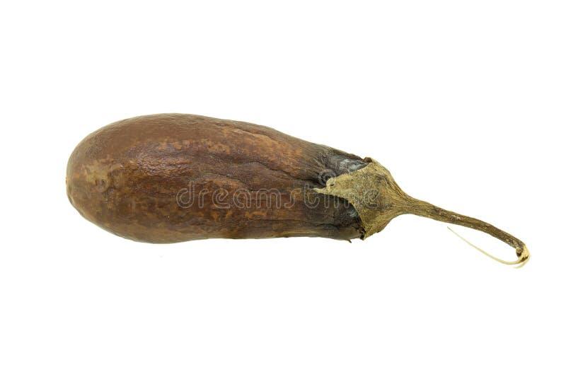 Isolerat ruttet för aubergine royaltyfria bilder
