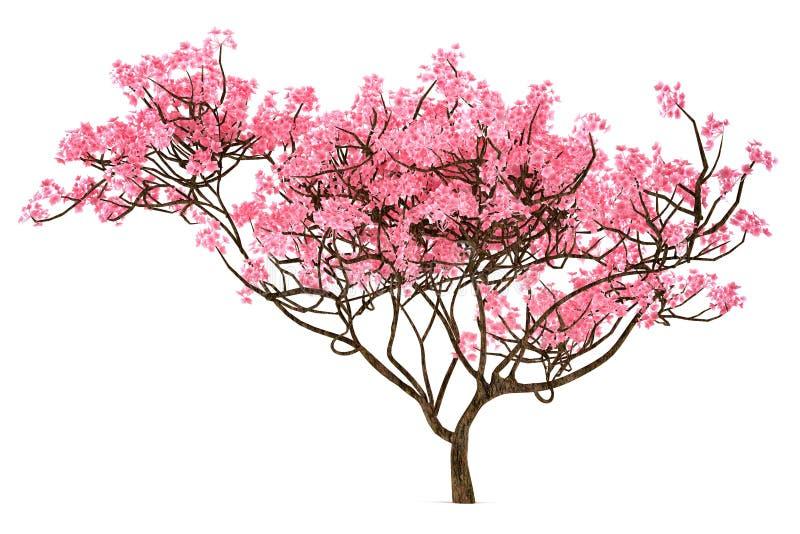 Isolerat Sakura träd royaltyfri illustrationer