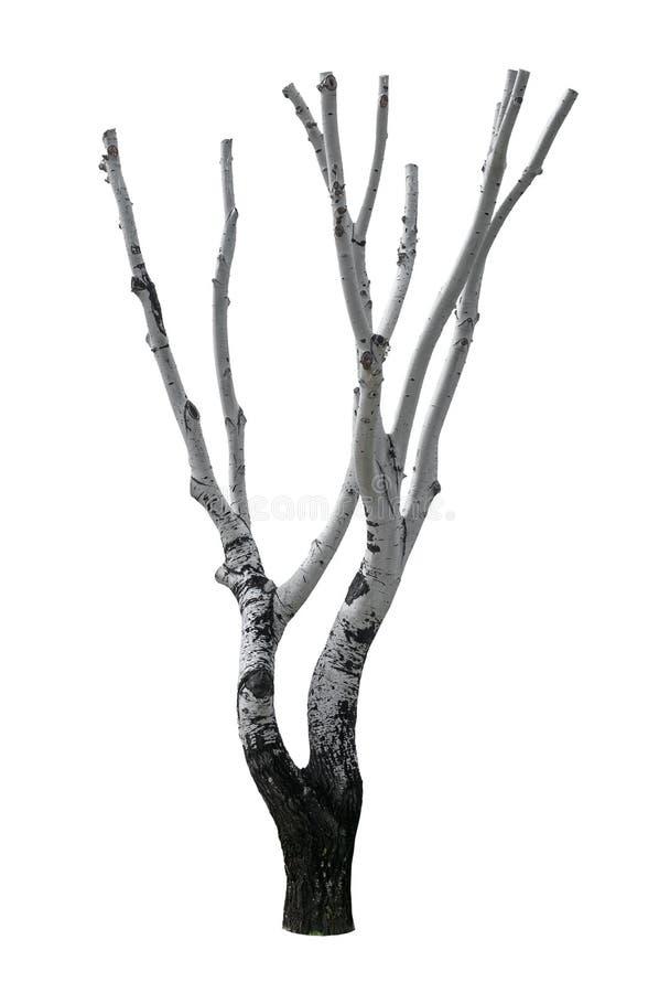 Isolerat snittträd arkivbild