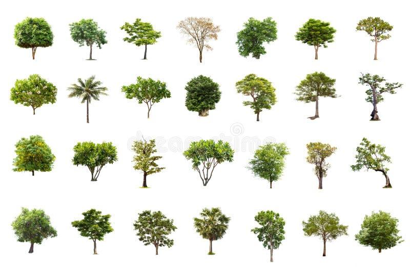 Isolerat stort träd på vit bakgrund, samlingen av träd royaltyfri foto