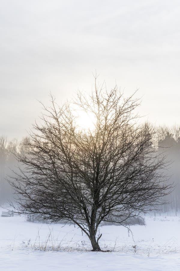 Isolerat träd och vinter royaltyfria foton