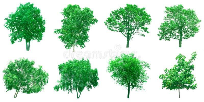 Isolerat träd på vit bakgrund royaltyfria bilder