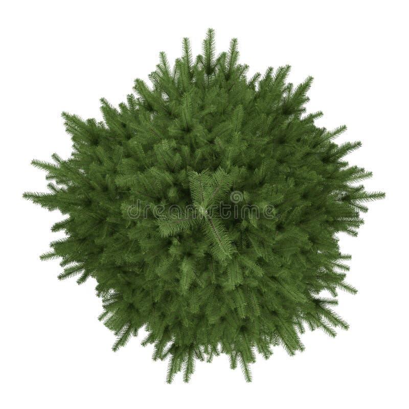 Isolerat träd. Piceagran-träd överkant royaltyfri illustrationer