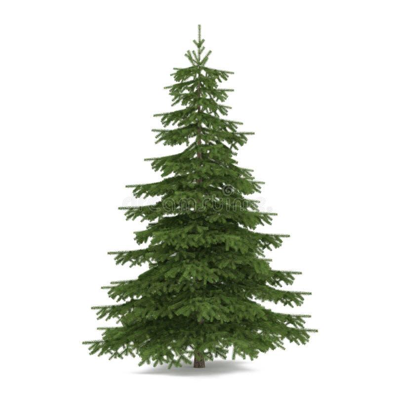 Isolerat träd. Piceagran-träd royaltyfri illustrationer