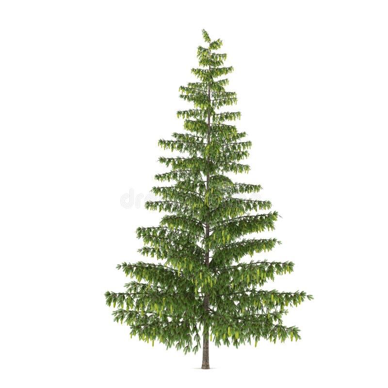 Isolerat träd. Pinusgran-träd stock illustrationer
