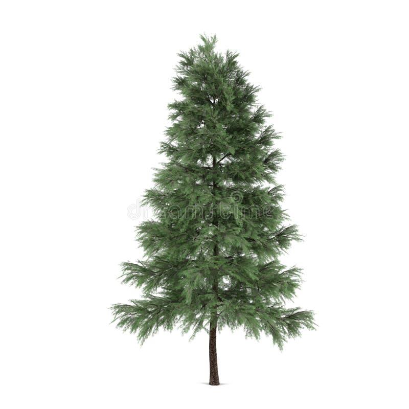 Isolerat träd. Pinussylvestrisgran-träd stock illustrationer