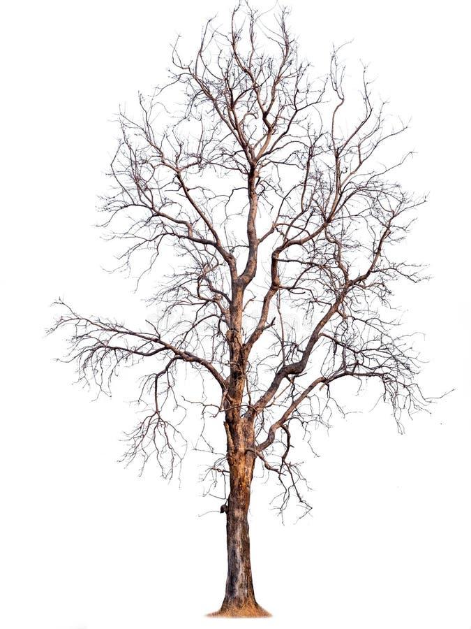 Isolerat träd utan bladet royaltyfria bilder