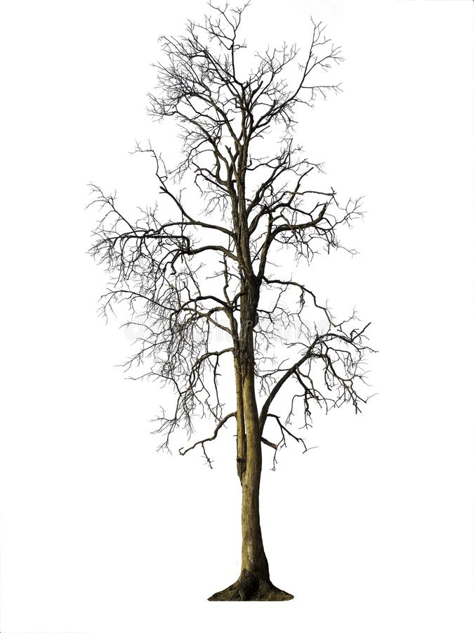 Isolerat träd utan bladet royaltyfri fotografi