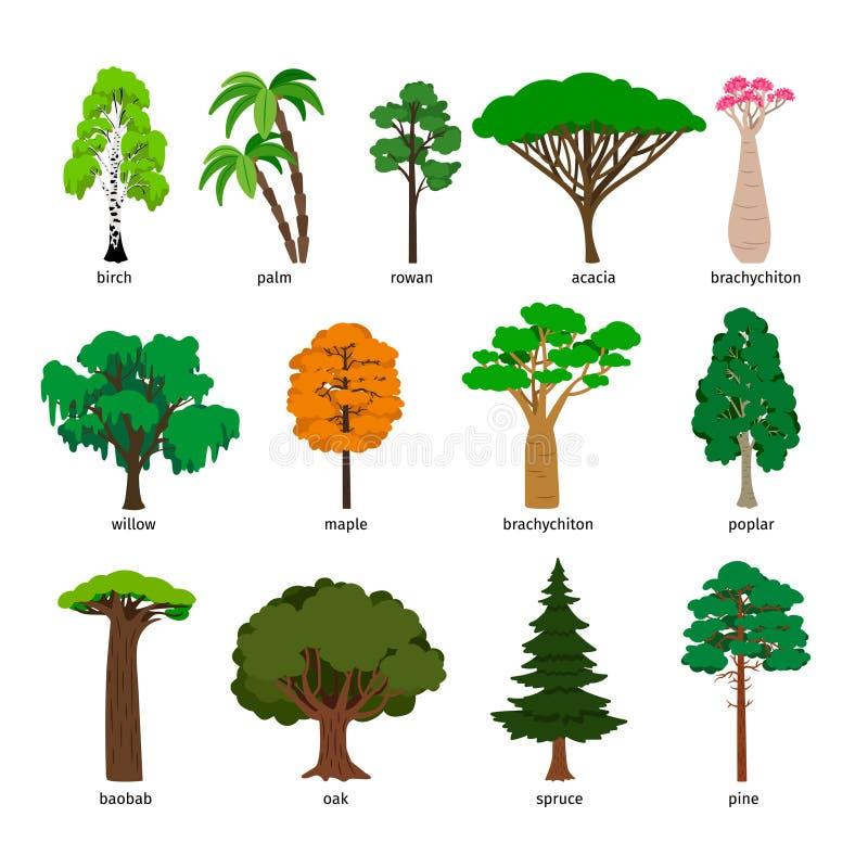 Isolering över vitbakgrund Uppsättningen för skogträdet med titlar, björk och ek, sörjer och baobab-, akacia- och granvektor stock illustrationer