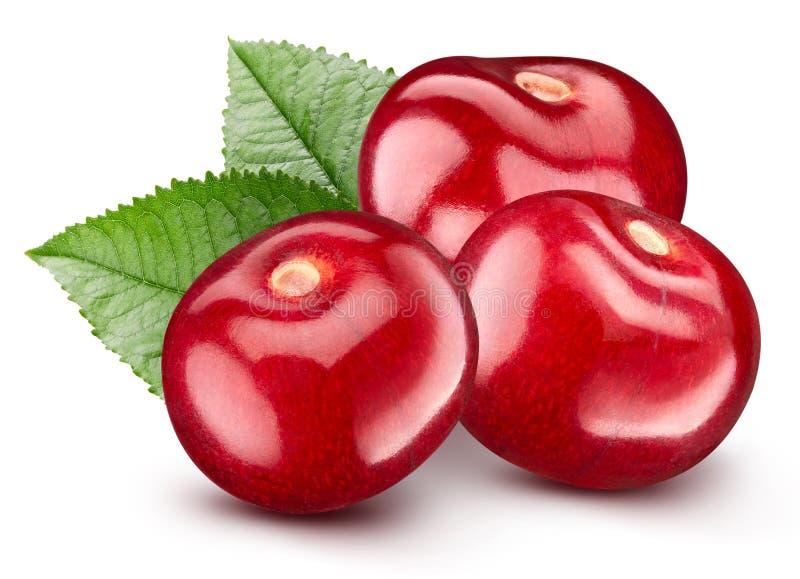 isoleringswhite f?r 100 Cherry fotografering för bildbyråer