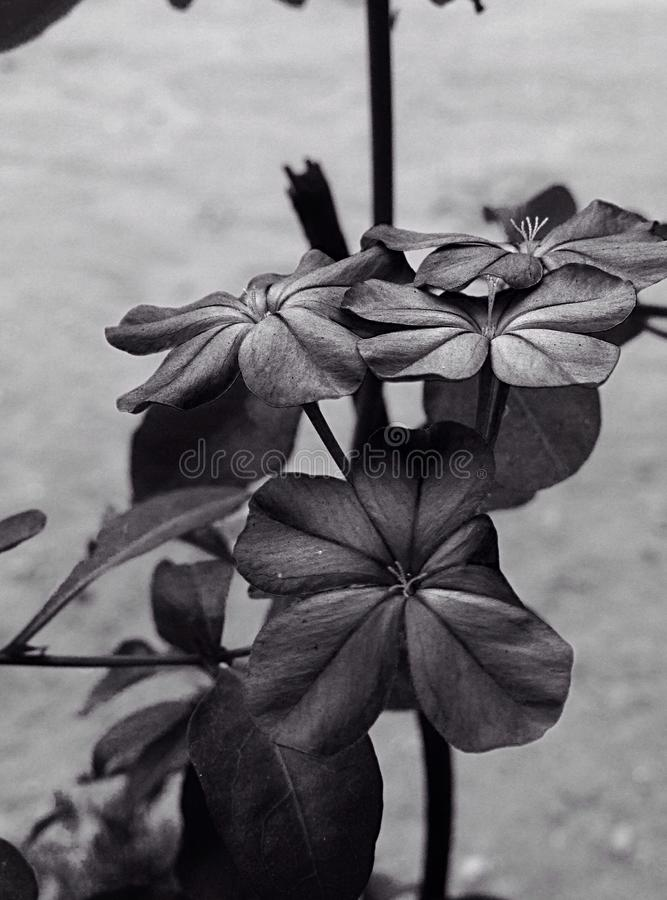 Isoleted-Blume stockfoto