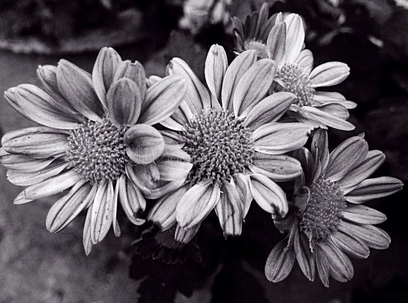 Isoleted-Blume stockfotos