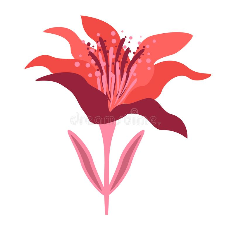 Isoleted red flower on the white background. royalty free stock images