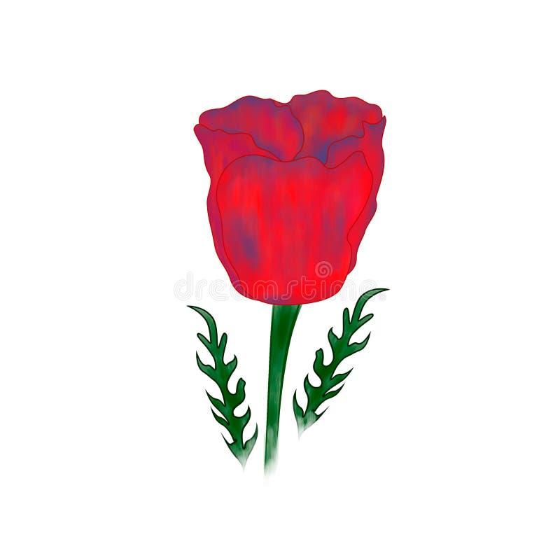 Isoleted rode poppie op de witte achtergrond stock foto