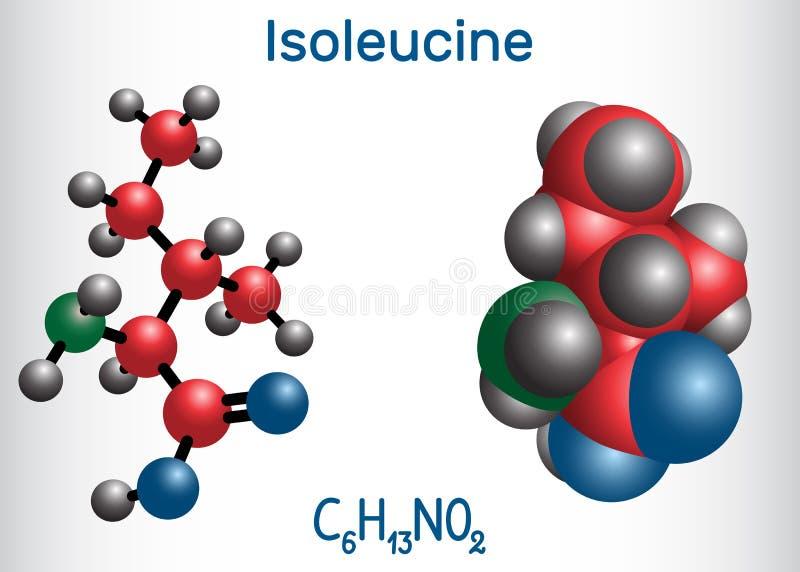 Isoleucina l isoleucina, Ile, molécula del aminoácido de I Se utiliza en la biosíntesis de proteínas Modelo de la molécula ilustración del vector