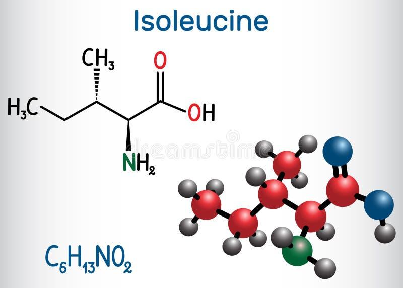 Isoleucina l isoleucina, Ile, molecola dell'aminoacido di I È utilizzato nella biosintesi delle proteine formula chimica struttur illustrazione vettoriale