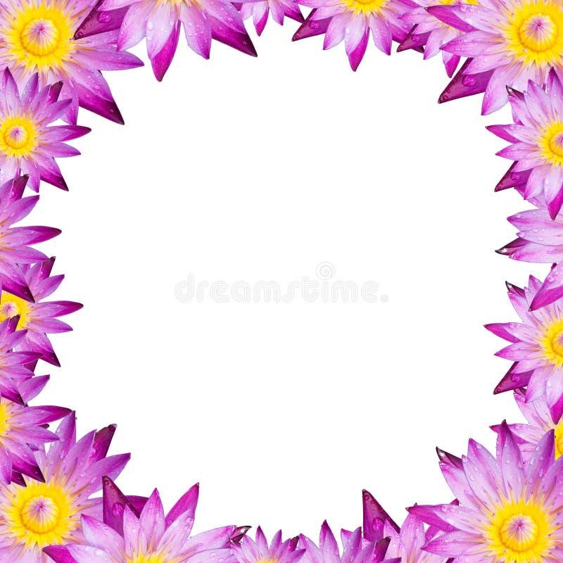 Isoli il loto o la ninfea quadrato della pagina su fondo bianco fotografia stock