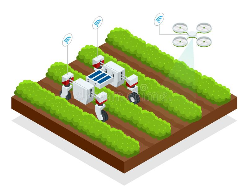 Isometric αυτόματα ελεγχόμενα μούρα συγκομιδών ρομπότ Έξυπνος ρομποτικός στη γεωργία, αγρότες ρομπότ αυτοματοποίησης πρέπει να εί διανυσματική απεικόνιση
