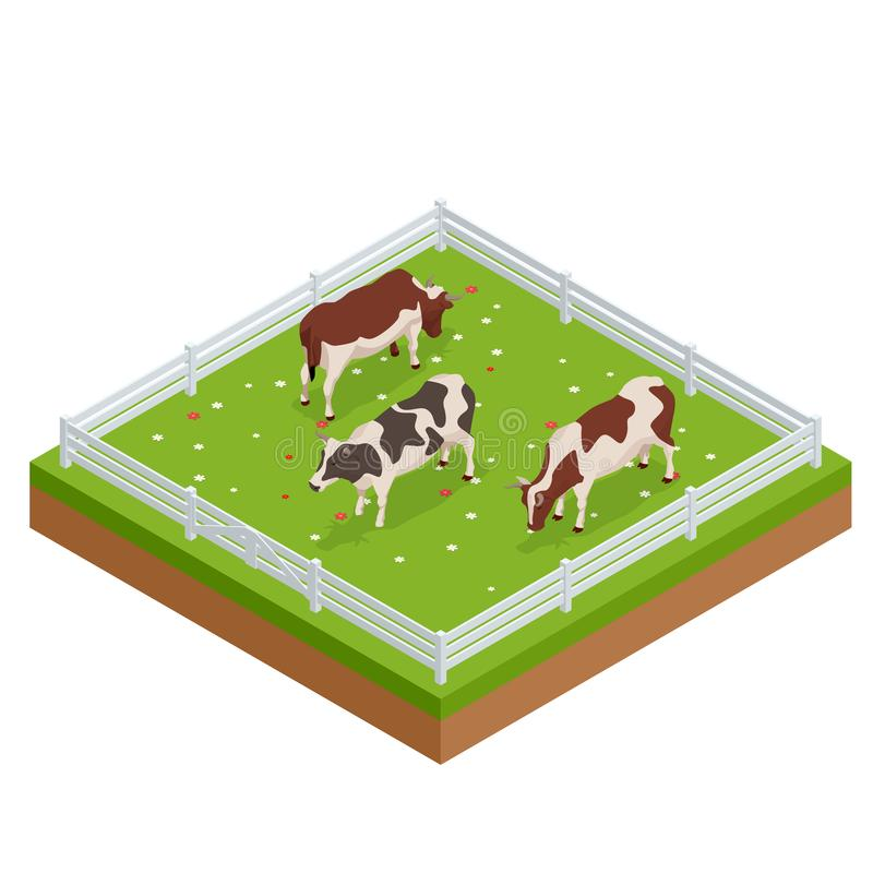 Isometric brown and white cows in a grassy field on a bright and sunny day. Dairy cattle set. Cows collection. Isometric brown and white cows in a grassy field stock illustration