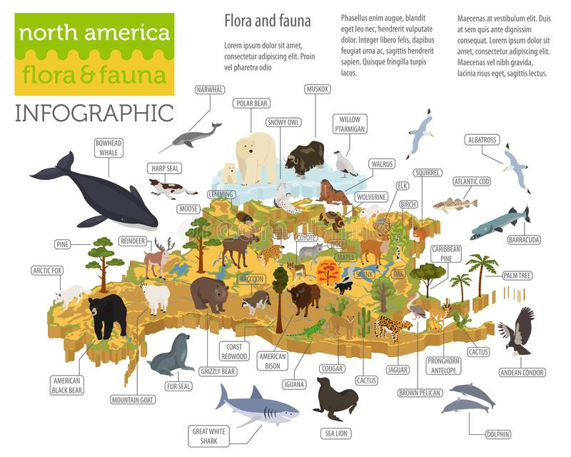 Isometric 3d North America flora and fauna map elements. Animals. Birds and sea life. Build your own geography infographics collection. Vector illustration stock illustration