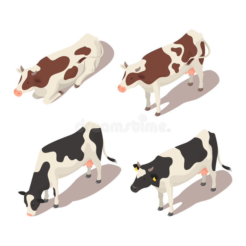 Isometric 3d vector set of cows. vector illustration