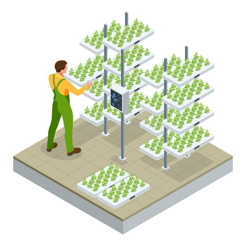 Isometric modern smart industrial greenhouse. Artificial intelligence robots in agricultural. Organic food, agriculture stock illustration
