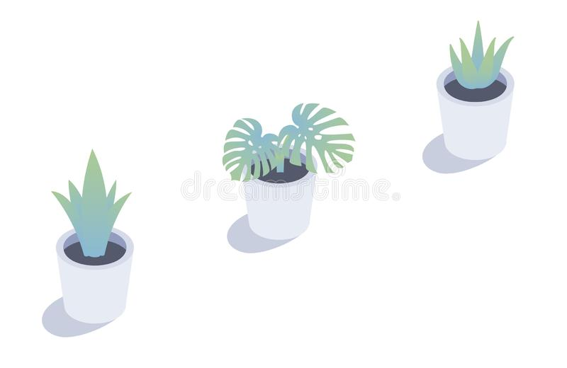 Isometric plant in flower pots. Isolated plants decorations. Isometric plant in flower pots. Isolated plants decorations vector illustration