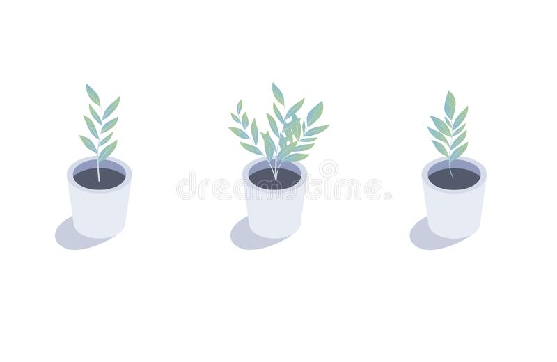 Isometric plant. Isolated indoor plants in flower pots.  royalty free illustration