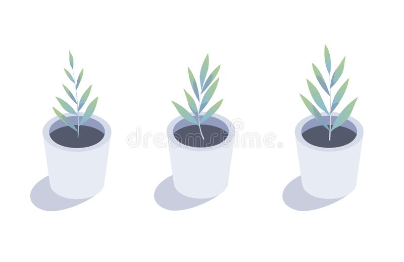 Isometric plant. Isolated indoor plants in flower pots.  stock illustration