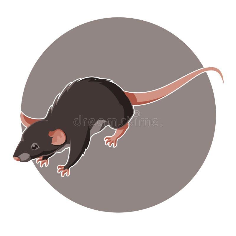 Isometric rat icon vector illustration