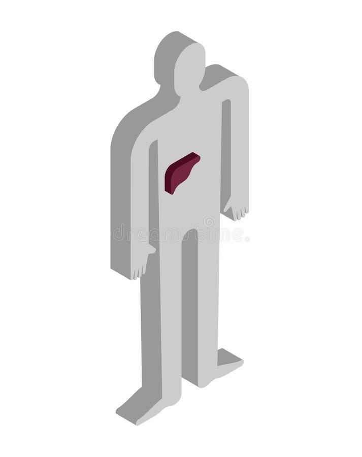 Isometrische Anatomie der Leber des menschlichen Körpers Innere Organe 3D organ vektor abbildung