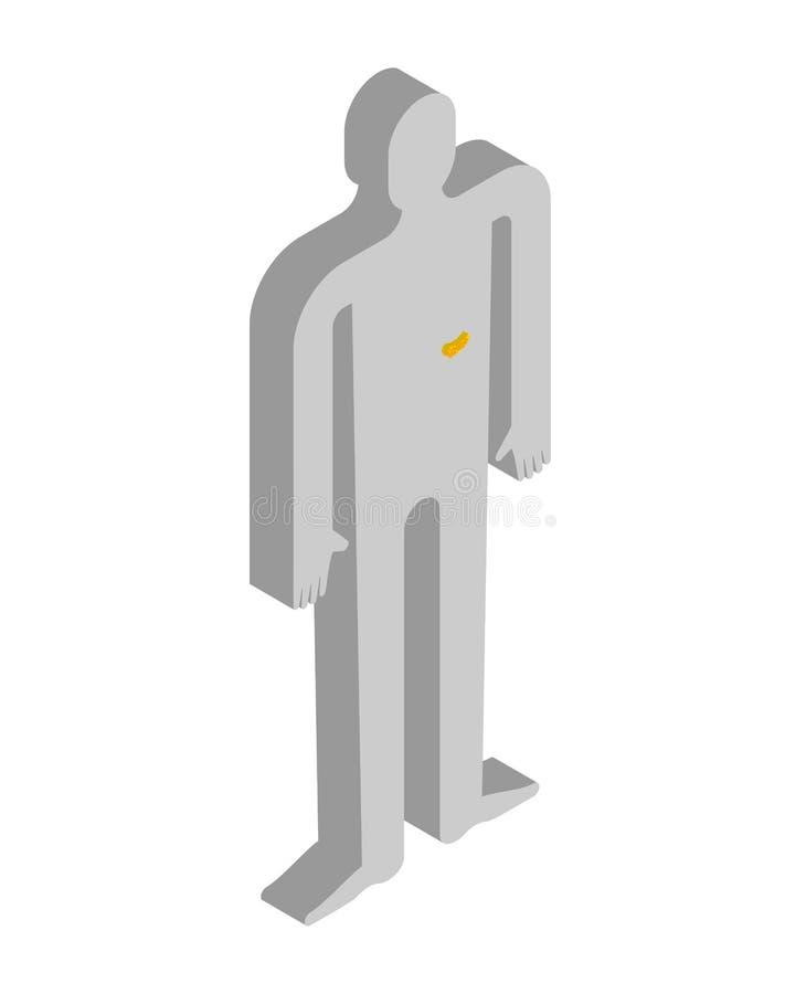 Isometrische Anatomie des Pankreas des menschlichen Körpers Innere Organe 3D oder lizenzfreie abbildung