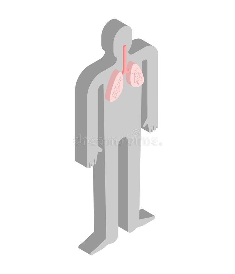 Isometrisk anatomi för lungor av människokroppen Inre organ 3D organ vektor illustrationer