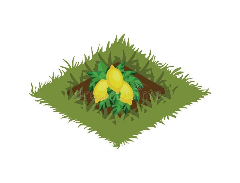 Isometrisk säng för tecknad filmfruktträdgård som planteras med citronträdet - beståndsdelar för den Tileset översikten vektor illustrationer