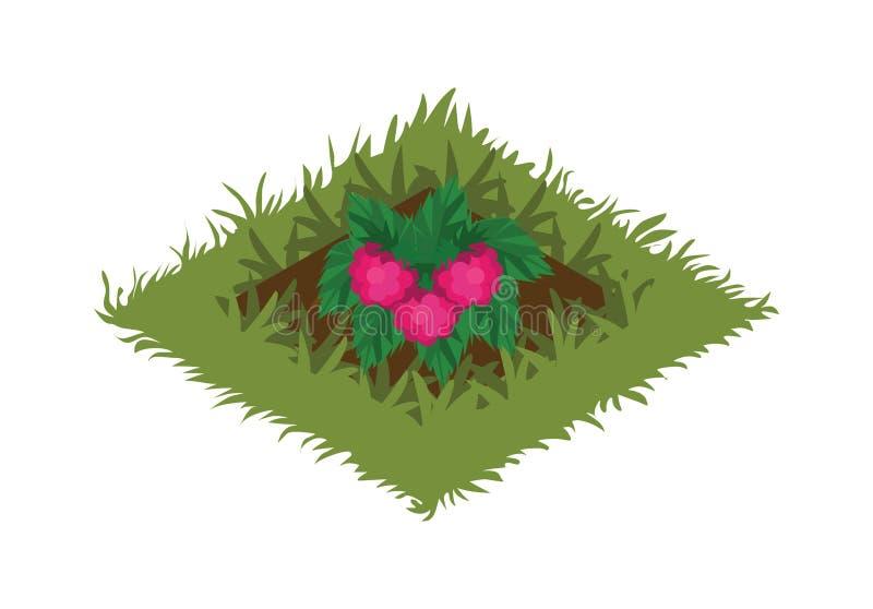 Isometrisk säng för tecknad filmfruktträdgård som planteras med hallonet Bush royaltyfri illustrationer