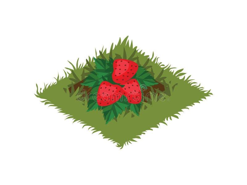 Isometrisk säng för tecknad filmfruktträdgård som planteras med jordgubben Bush - beståndsdelar för den Tileset översikten royaltyfri illustrationer